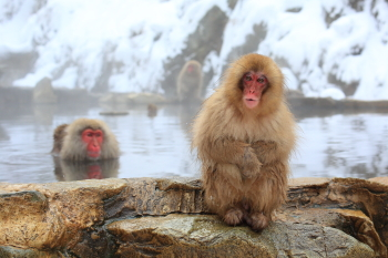 猿1.JPG